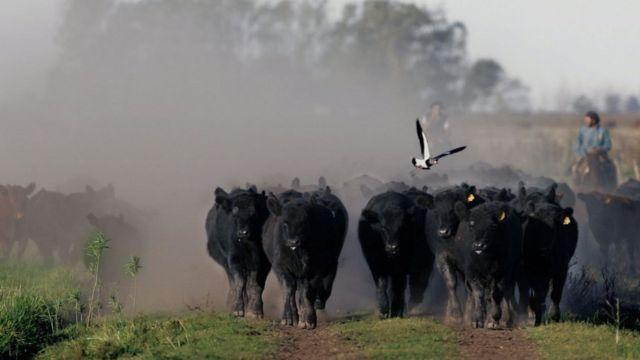 Аргентинская говядина славится во всем мире