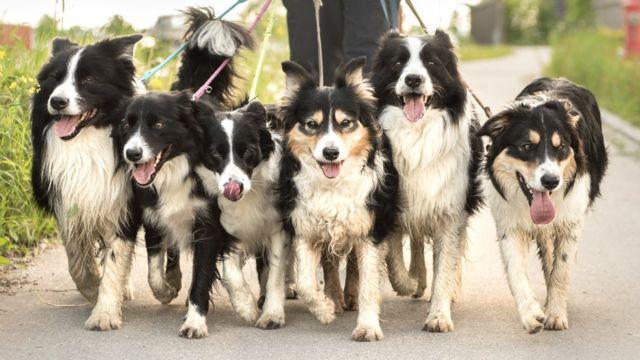 Psi u šetnji