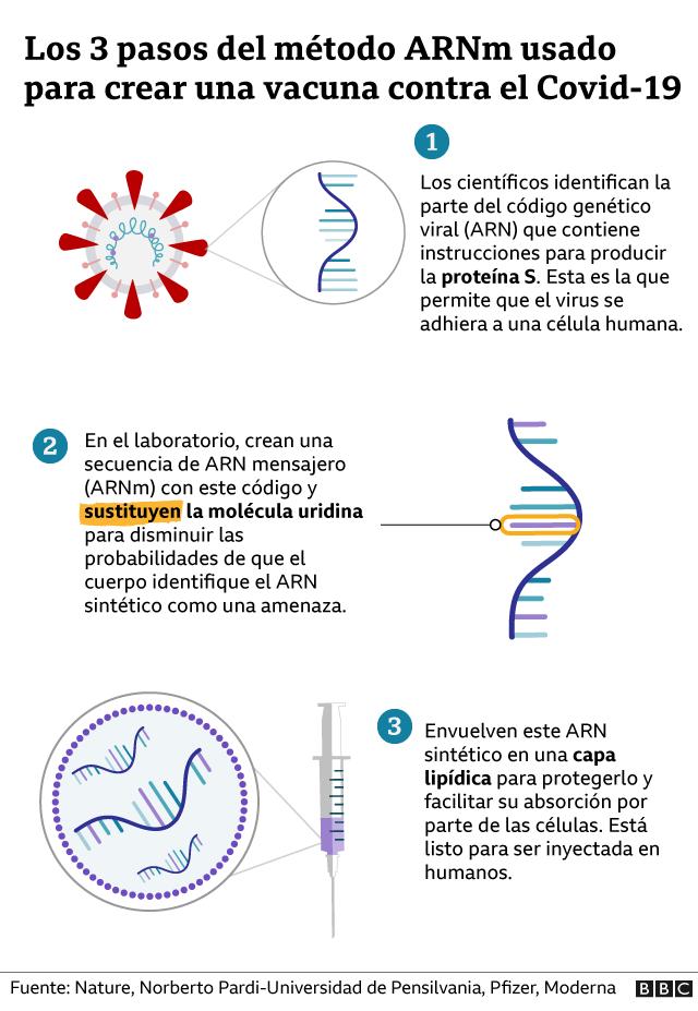Gráfico de la creación de la vacuna