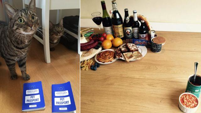 Gatos y comida