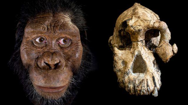 ใบหน้าของ Australopithecus anamensis ที่จำลองขึ้นใหม่ เปรียบเทียบกับฟอสซิลกะโหลกศีรษะที่พบ