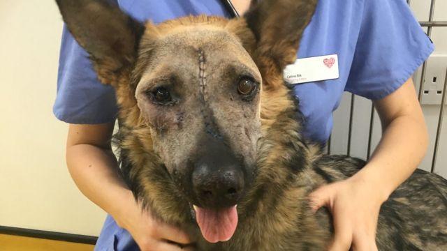 Dog's face reconstructed after motorbike crash