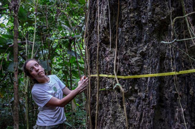 Erika Berenguer avalia árvore na Amazônia