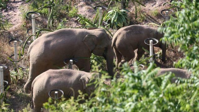 elefantes en China