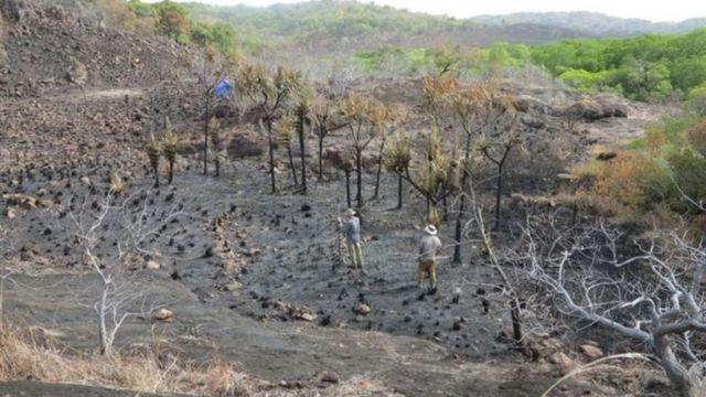 माबुयाग टापुमा फेला परेको केरा खेतीस्थल