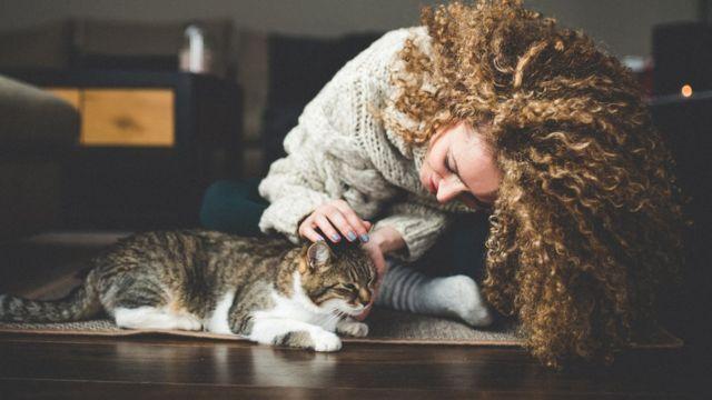 gatos, animales, ciencia