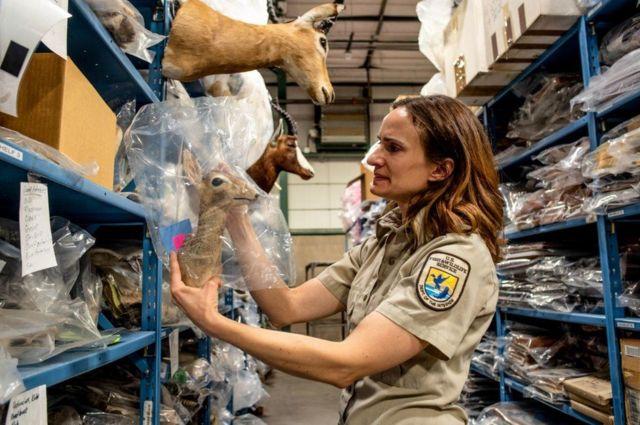 국립 야생동물 물품 보관소는 보호 전문가들의 업무에서 중요하면서도 특별한 의미가 담긴 거점이다