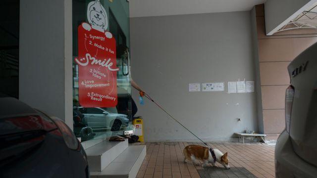 สุนัขพันธุ์คอกี้เดินนำหน้าเจ้าของออกจากสำนักงาน พร้อมด้วยสายจูง
