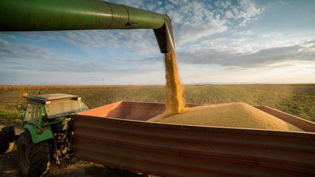 Soja em farinha sendo despejada em caçamba de trator em plantação