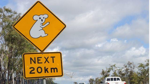 placa com coala