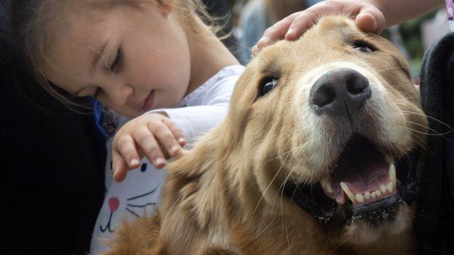 개를 쓰다듬고 있는 한 아이