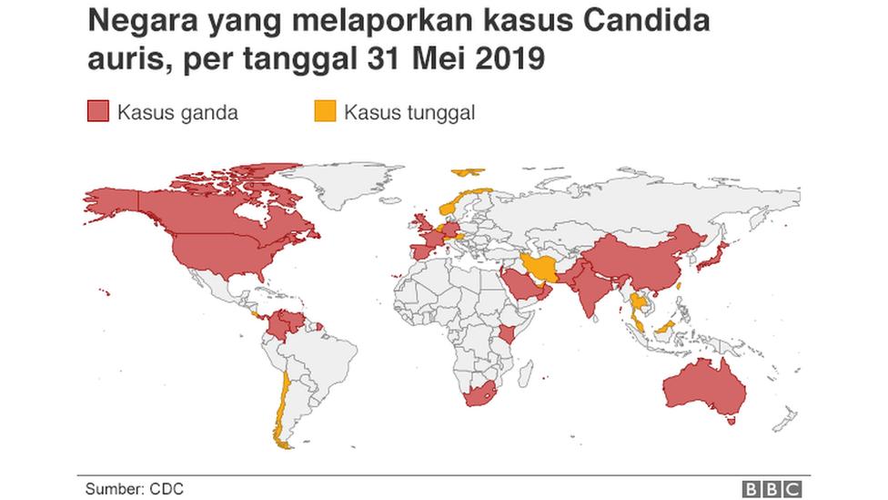 Candida Auris Mikroba Kebal Obat Yang Banyak Menghantui Rumah Sakit Bbc News Indonesia