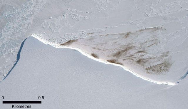 2015년 펭귄 군락의 존재가 펭귄 배설물로 관측됐다