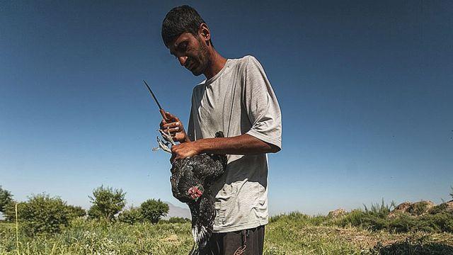 Среднеазиатские цыгане-люли очень чтят свои традиции. Одна из них – приношение в жертву черной курицы перед любым новым начинанием.