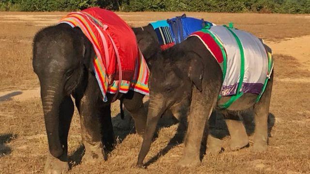 Baby elephants in woolly jumper