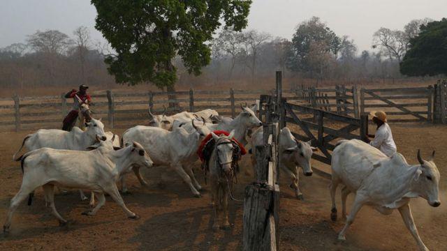 Dois rancheiros separam o gado em Pocone, Mato Grosso, região do Pantanal que está sofrendo com incêndios