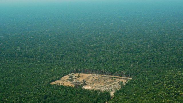 Pedazo de la selva del Amazonas con restos de deforestación.