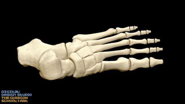 3D foot skeleton