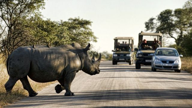 Носорог переходит дорогу