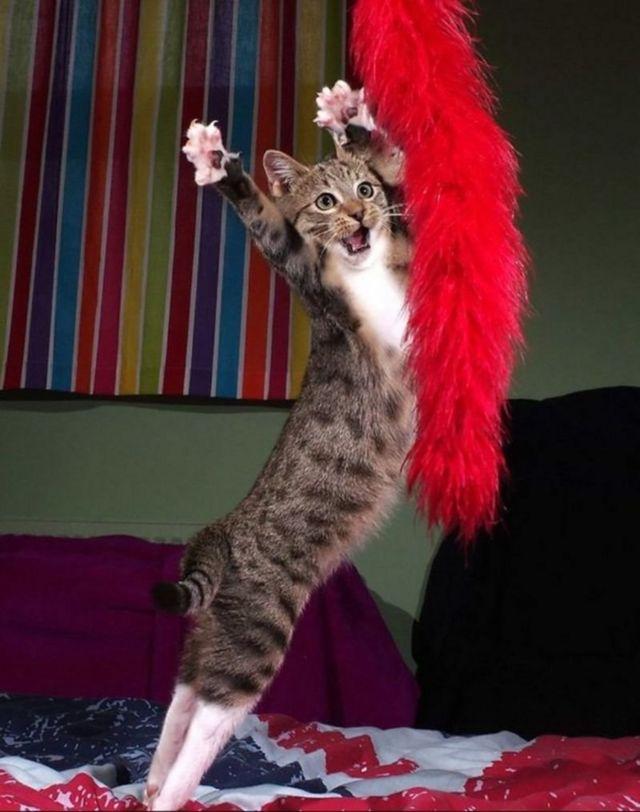 Sahne için doğmuş bir kedi.