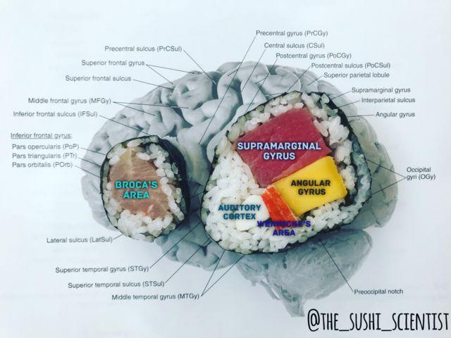 Ilustración del cerebro hecha con sushi