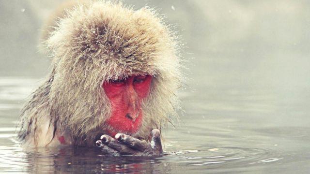 Обезьянка сидит в теплой воде