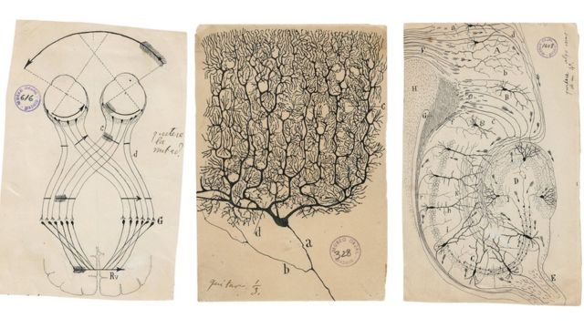 Ilustraciones de Santiago Ramón y Cajal