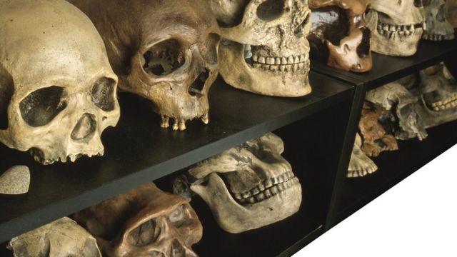 Uma coleção de crânios humanos antigos em uma prateleira