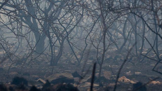 Un bosque quemado en Córdoba