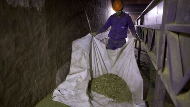 Producción de yerba mate.