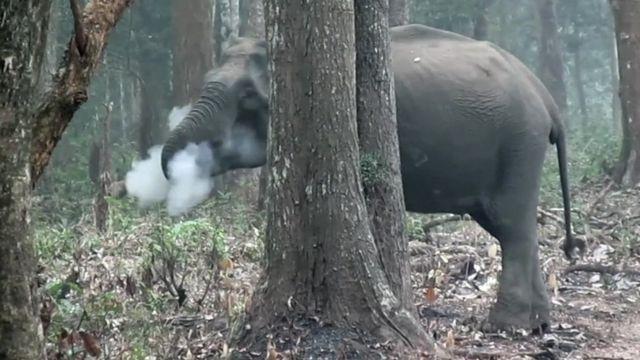 Elefante soltando fumaça em floresta da índia