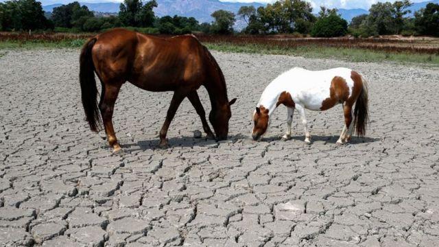 Найти траву на Корсике в июле 2019 года было непросто