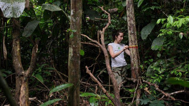 Autora principal do estudo, Erika Berenguer, medindo árvores em uma floresta amazônica queimada durante o El Niño de 2015