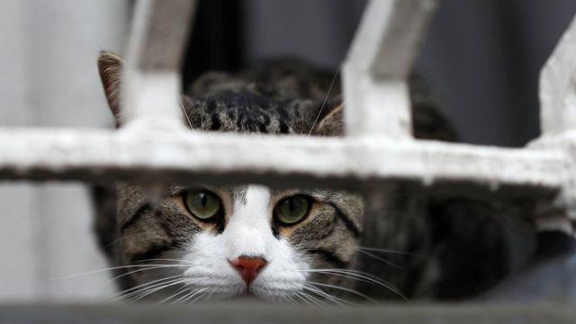 Кіт Джуліана Ассанжа