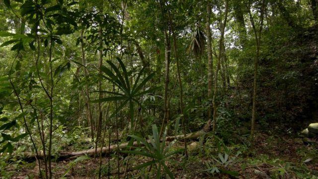В джунглях очень сложно обнаружить руины ушедшей цивилизации