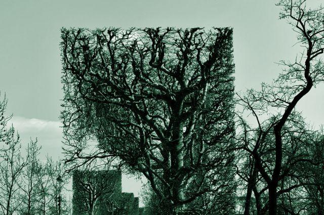 Paisaje con árboles cuadrados y normales