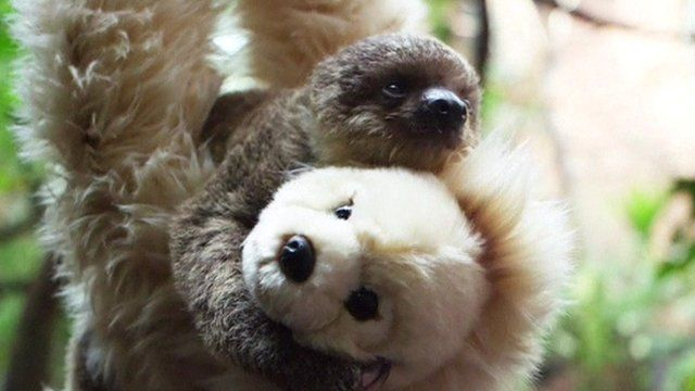Sloth with soft toy