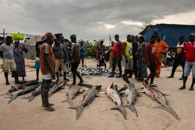 People watch sharks on a beach