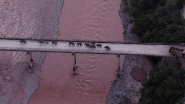 Elefantes foram vistos cruzando o rio Yuanjiang, na província de Yunnan, no domingo