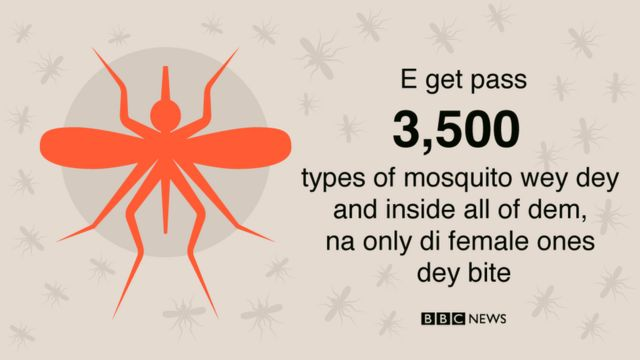 Statistics about mosquito