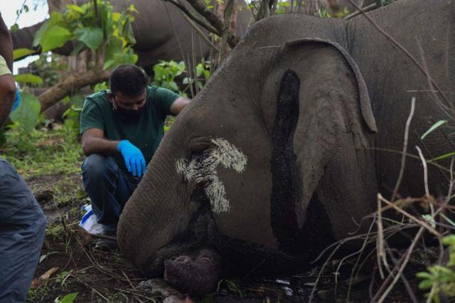 gajah, India