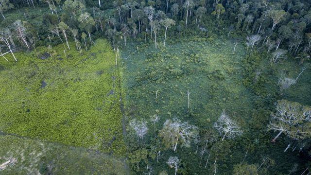 Área de floresta desmatada no Acre