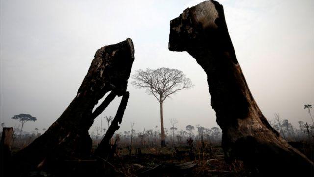 Troncos queimados e uma árvore em pé em terreno arrasado