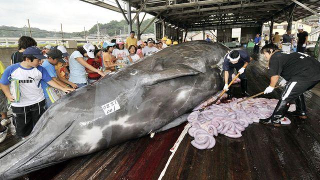 Caza de ballenas en Japón.