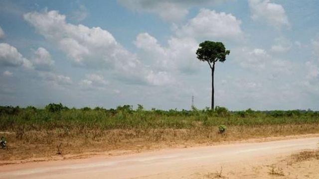 estrada de terra ao lado de floresta desmatada, com uma única árvore
