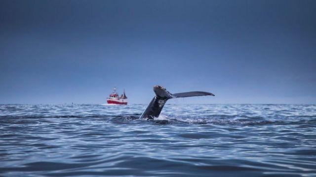 Cola de un cetáceo