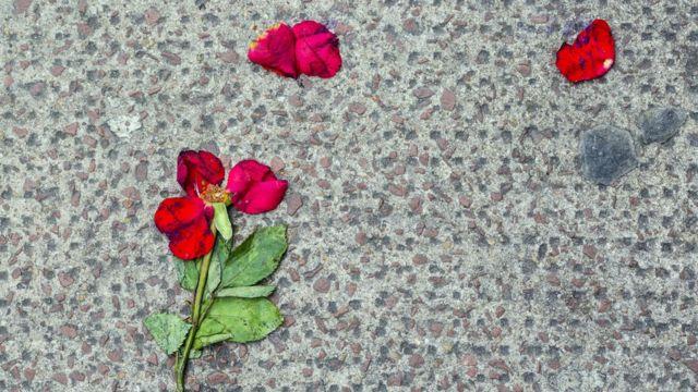 Foto artística de pétalos de flor