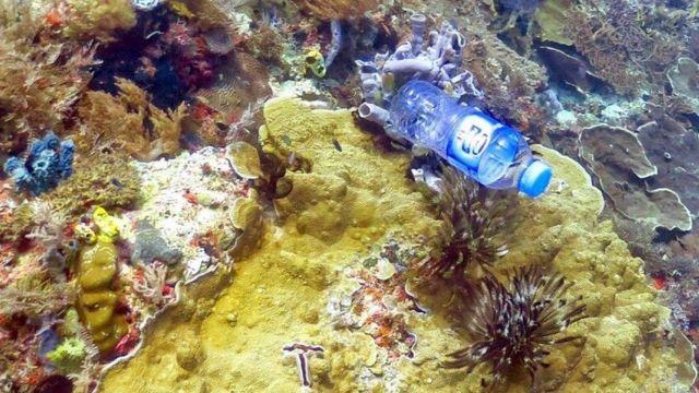 ขวดพลาสติก ติดอยู่บนแนวปะการัง