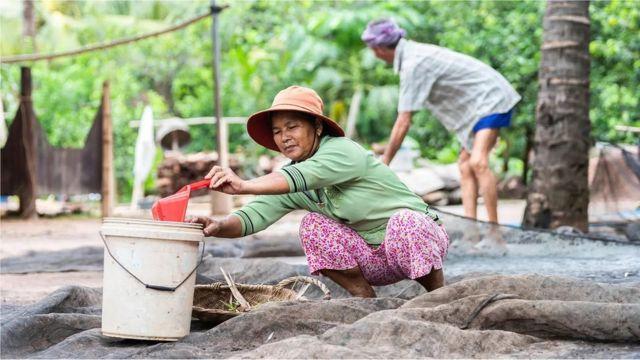 Les villageois récoltent le guano, un engrais populaire au Cambodge et en Thaïlande, mais qui comporte des risques