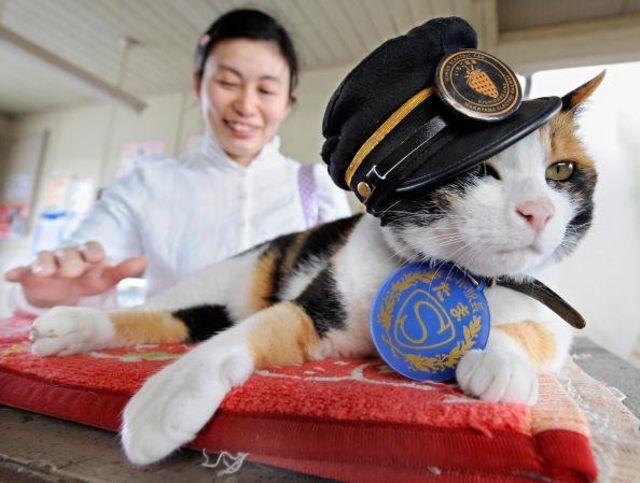 Tama si kucing kepala stasiun